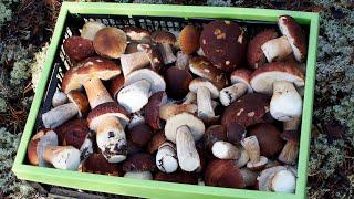 Как и где искать грибы в лесу по спутниковым картам. Подготовка к поездке за грибами за компьютером