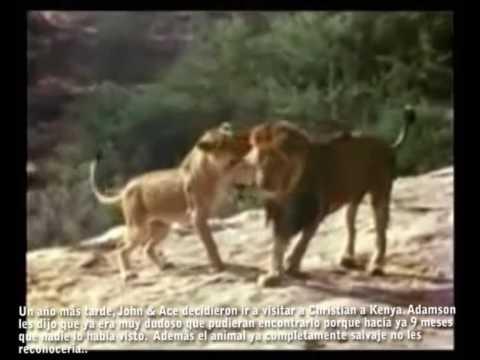 Christian, el león VERSION COMPLETA