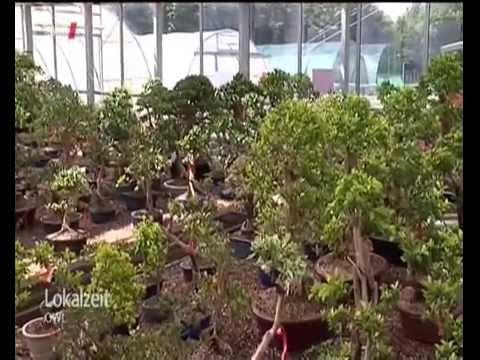 Lokalzeit Owl Bonsai Schule In Enger Youtube