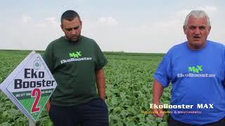 EkoBooster MAX na secernoj repi , Crepaja 2018. Poljoprivreda - ratarstvo