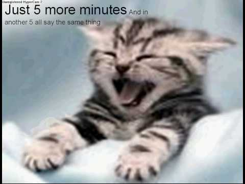 Very Funny Cats Lol Youtube