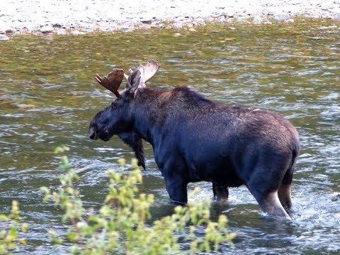 Fly Fishing Montana's Rock Creek - 2
