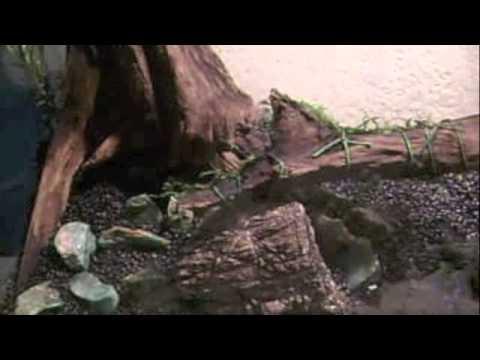 Montaje de un acuario plantado ada youtube - Montaje de acuarios ...