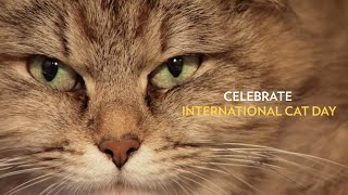 National Geographic International Cat Day