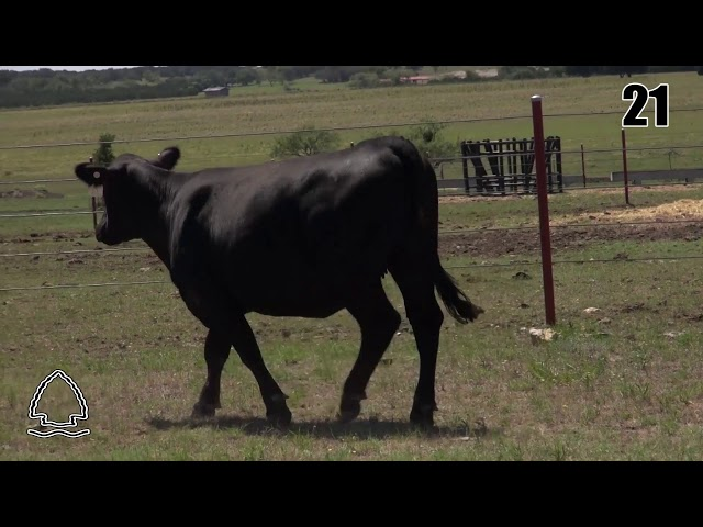Pearcy Angus Ranch Lot 21