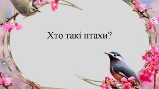 Кто такие птицы? Презентация для детей