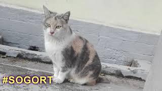 Стихотворение Кошка, аудио версия, стихи про животных