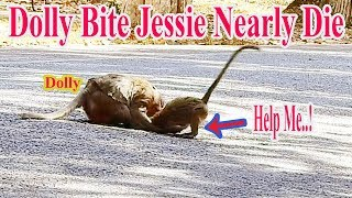 O-M-G Poor Jessie Nearly Die Because Dolly Bite Her So Hard On Road, Jessie Cry Stuck In Mouth Dolly