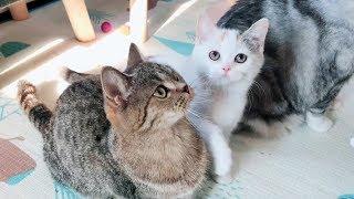 这是个神奇的逗猫器:大小猫咪们神同步鬼畜摇头,场面一度混乱