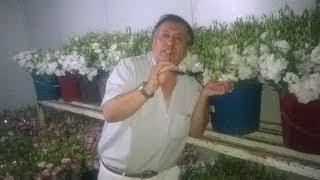 LİSYANTUSTA ŞOK FİYAT _ izmir kesme çiçek _ 0 532 668 50 50