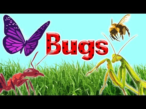 10 Interesting Insects || Insects for Kids  || Bugs for Kids