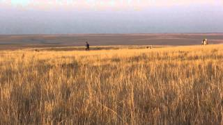 Skydance ~ Pheasant Hunting, Dog Training On Horseback.