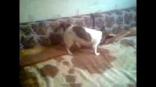 Собака ездит на попе(, 2012-04-29T14:55:11.000Z)