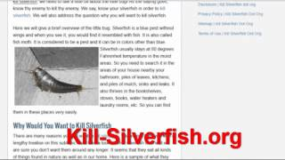 Kill Silverfish by kill-silverfish dot org