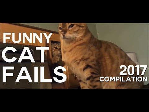 Funny Cat Fails Compilation 2017