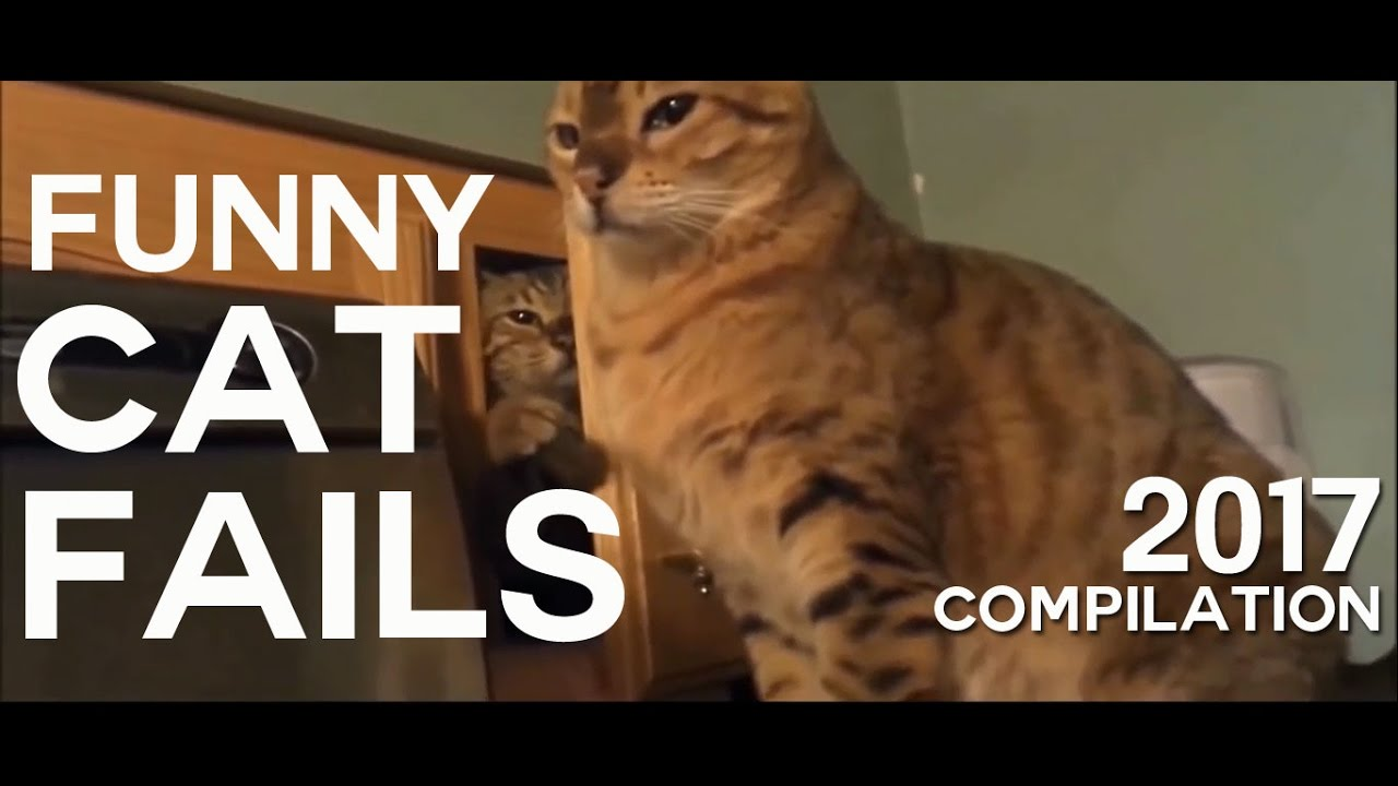 Funny Cat Fails Try Not To Laugh