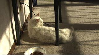 Paul Adopts Sam Kitty