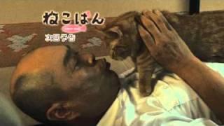 『ねこばん』第5回―猫は、心地よさの鑑定家だ。 2010年10月スタート、伊...