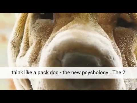 chinese-shar-pei---dog-training-|-dog-&-puppy-obedience-training-|-dog-grooming-|-training-for-free