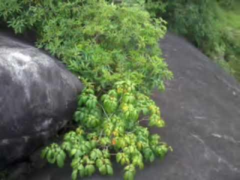 Nedumangad Thirichittoor Rock .Thirichitta Paara