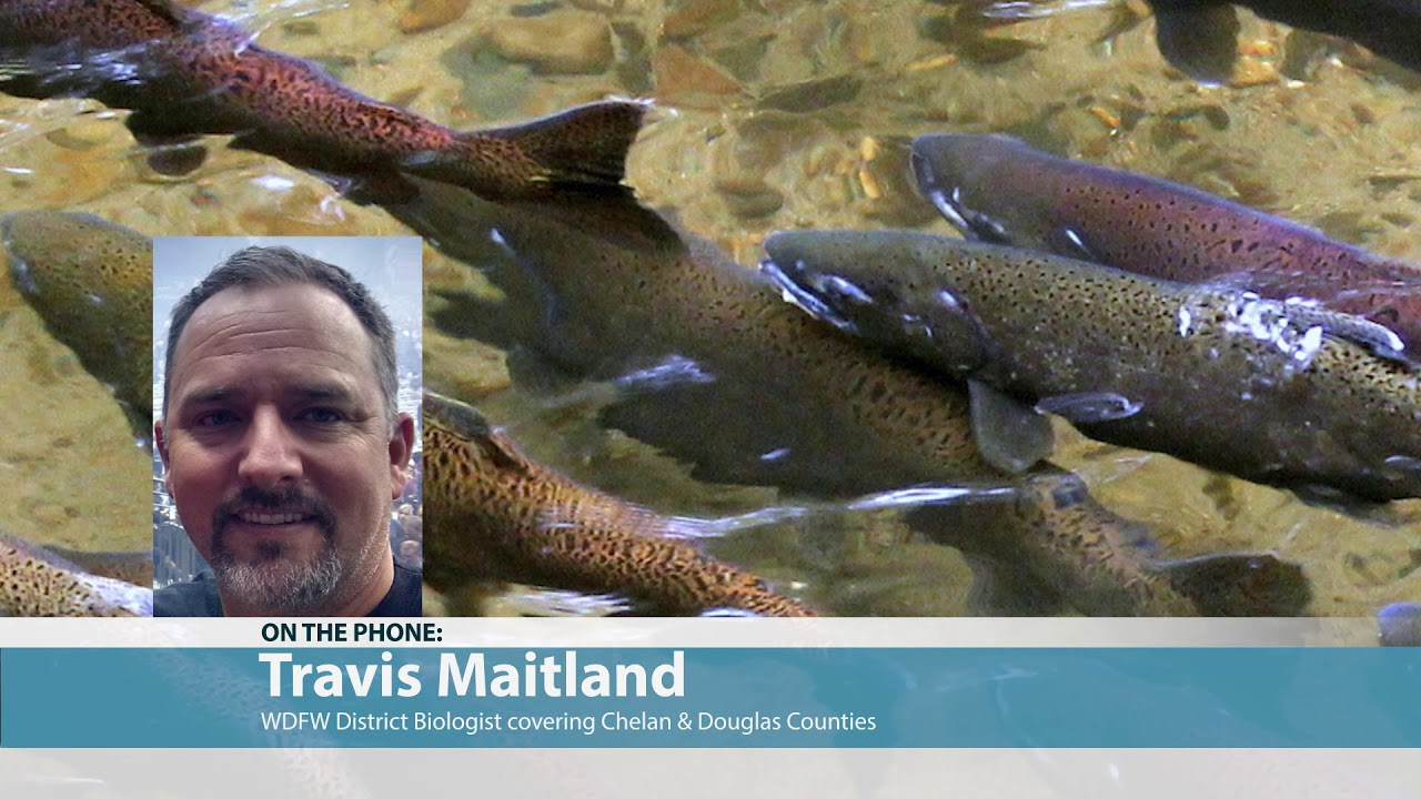 Travis Maitland on Chelan Chinook Spawning 2019-06-26