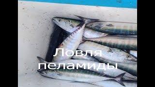 Ловля пеламиды Рыбалка на Черном море г Новороссийск