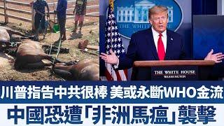蓬佩奧:美國可能不再金援WHO|中國恐遭「非洲馬瘟」襲擊|早安新唐人【2020年4月24日】|新唐人亞太電視