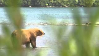 Kamchatka Bears under the rainbow