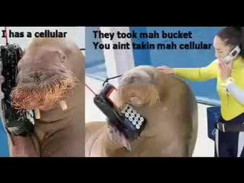 Walrus Bucket Saga - YouTube