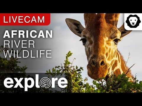 Live Stream Animal African River Wildlife Camera