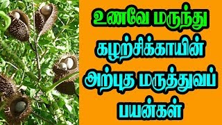 Sagargota Seeds Benefits