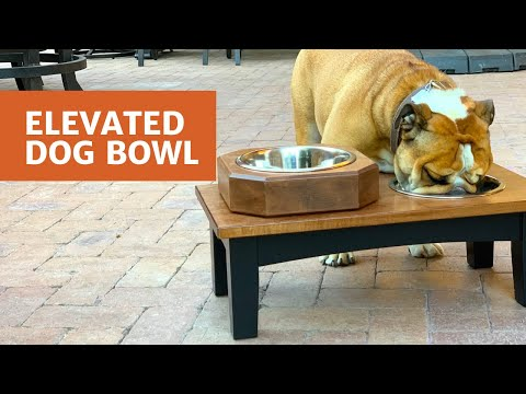 Elevated Dog Bowl - Woodworkers Fighting Cancer 2019