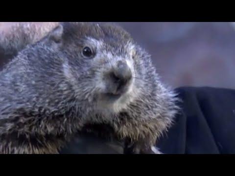 Groundhog Day: Punxsutawney Phil Predicts More Winter