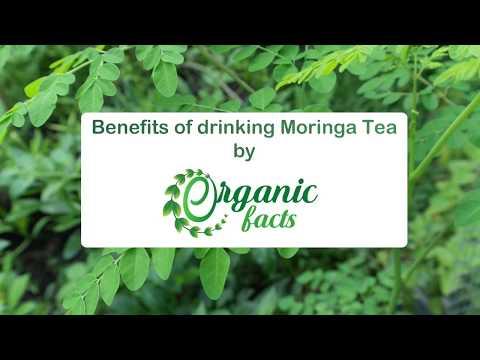 Moringa Tea Benefits | Organic Facts