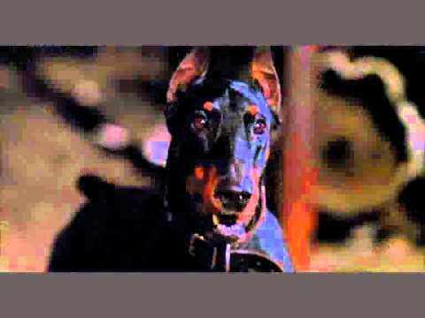 Doberman pinscher in movies