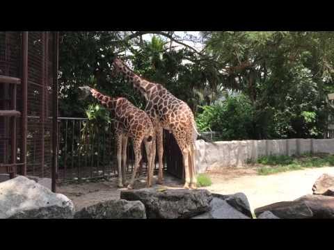 RFZ03 (Eng Ver) : Zoo Negara ,Malaysia Part1