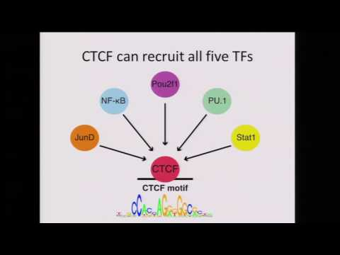 Hunter Fraser, Pooled ChIP-seq identifies QTLs affecting transcription factor binding