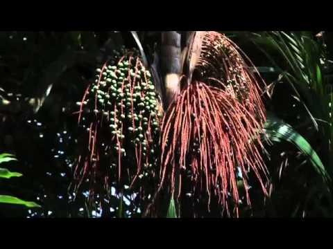 NOVA AMAZÔNIA 30 05 2012 FLORESTAS f4v