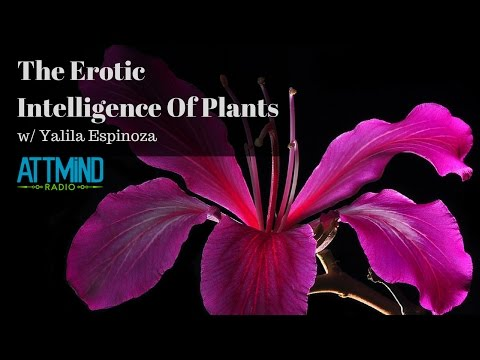 The Erotic Intelligence Of Plants | Interview with Yalila Espinoza, PhD, RSW  | ATTMind Ep 22