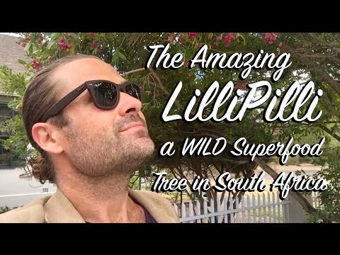 Ep 11 - South Africa Series Part 1 - Lilli Pilli Wild Superfood Tree