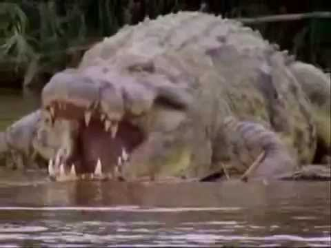 Gustave - Giant Crocodile of Primeval Movie - YouTube