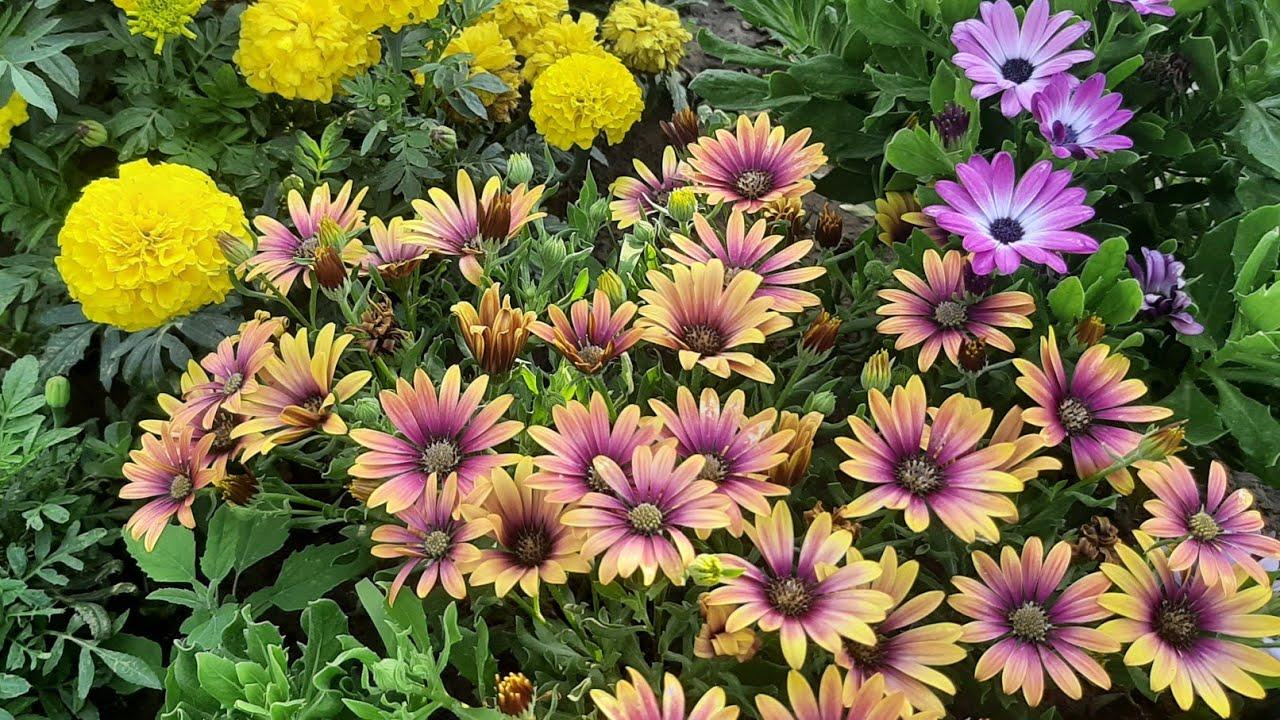 ЦВЕТЫ БУДУТ ЦВЕСТИ ВСЕ ЛЕТО ДО ЗИМЫ подкормка для пышного цветения