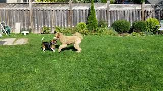 Bailey and Harper playing in the sun.