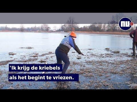 Eerste schaatsers testen natuurijs Friesland