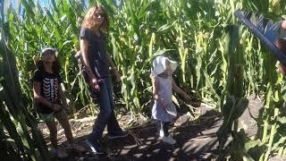 20181006 Petaluma Corn Maze