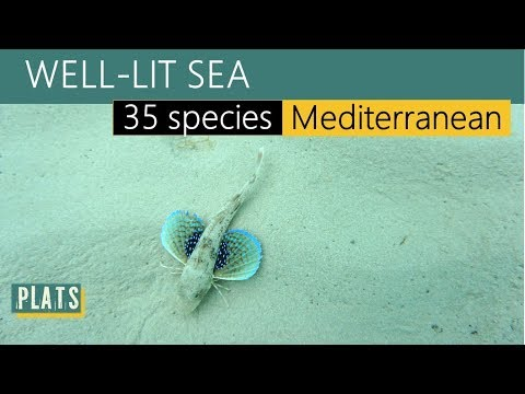 Well-lit Sea (35 marine species, Greece)