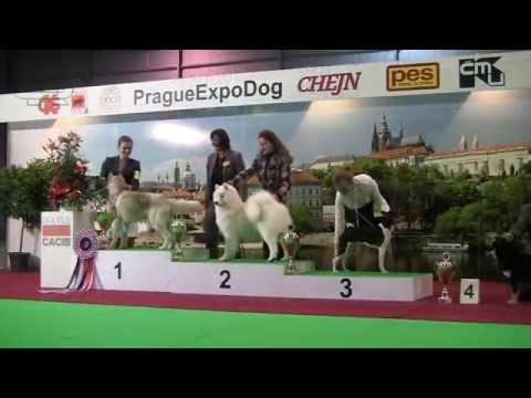 Prague Expo Dog Double CACIB 2014