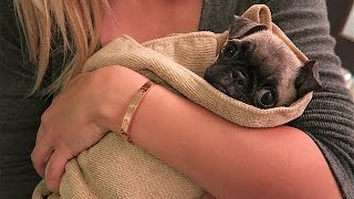 BABY PUGS FIRST BATH!!