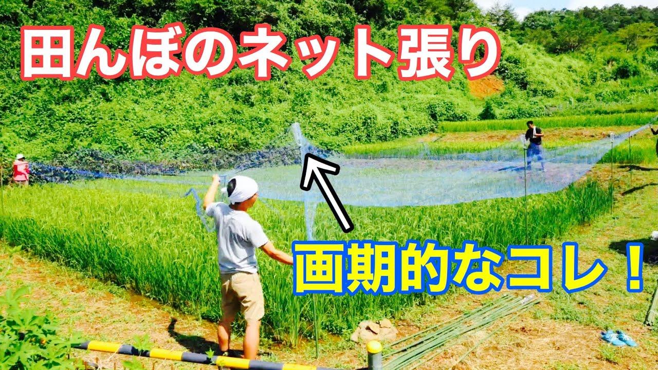 【自然稲作】棚田 田んぼのネットの張り方と画期的なアイテム紹介