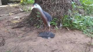 การวางครืนนกกวักครึ่งวงกลม งานศรีสะเกษ  สนใจสอบถามที่ ไลค์ somsuk2010